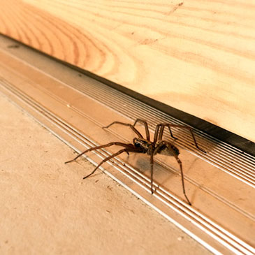 Get rid of spiders like this one