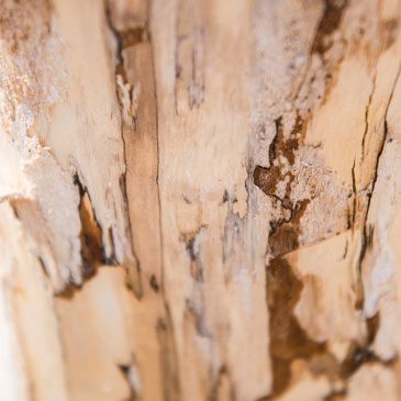 Wood ruined by termites