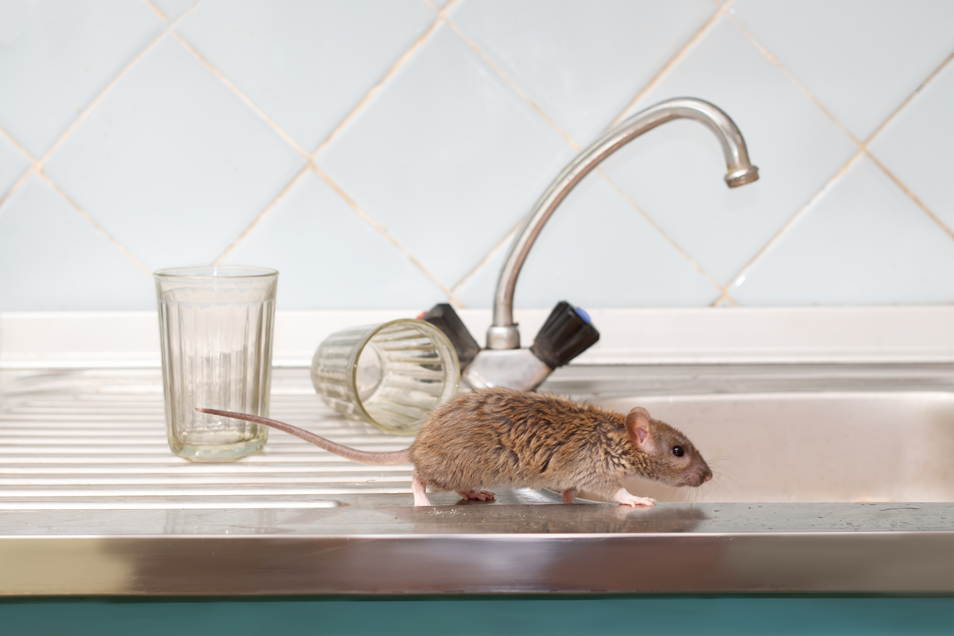 Contact Your Orlando Rodent Control Pros to Mitigate Your Rodent Infestation